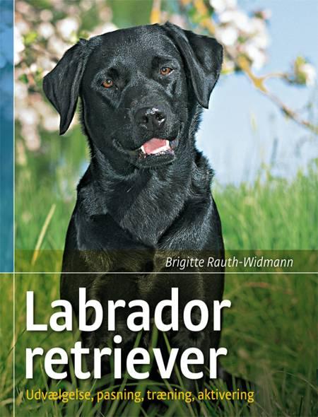 Labrador retriever af Brigitte Rauth-Widmann