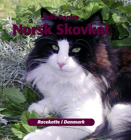 Norsk skovkat af Felis Danica