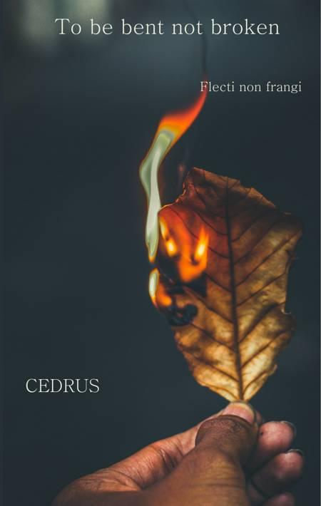 To be bent, not broken af Cedrus Poetry