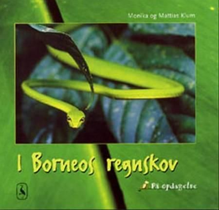 I Borneos regnskov af Mattias Klum og Monika Klum