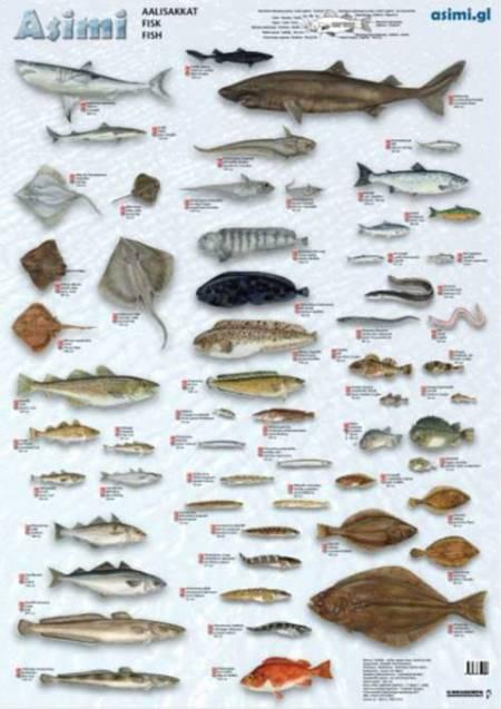 Fisk af Jørgen Steen