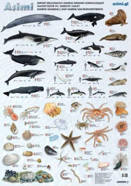 Havpattedyr og smådyr i havet af Jørgen Steen