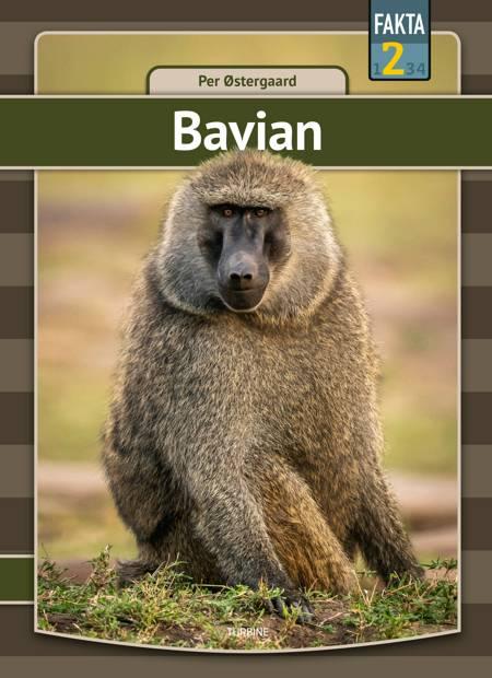 Bavian af Per Østergaard