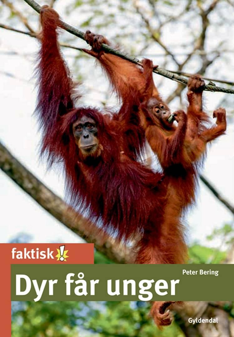 Dyr får unger af Peter Bering