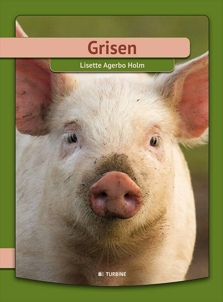 Grisen af Lisette Agerbo Holm