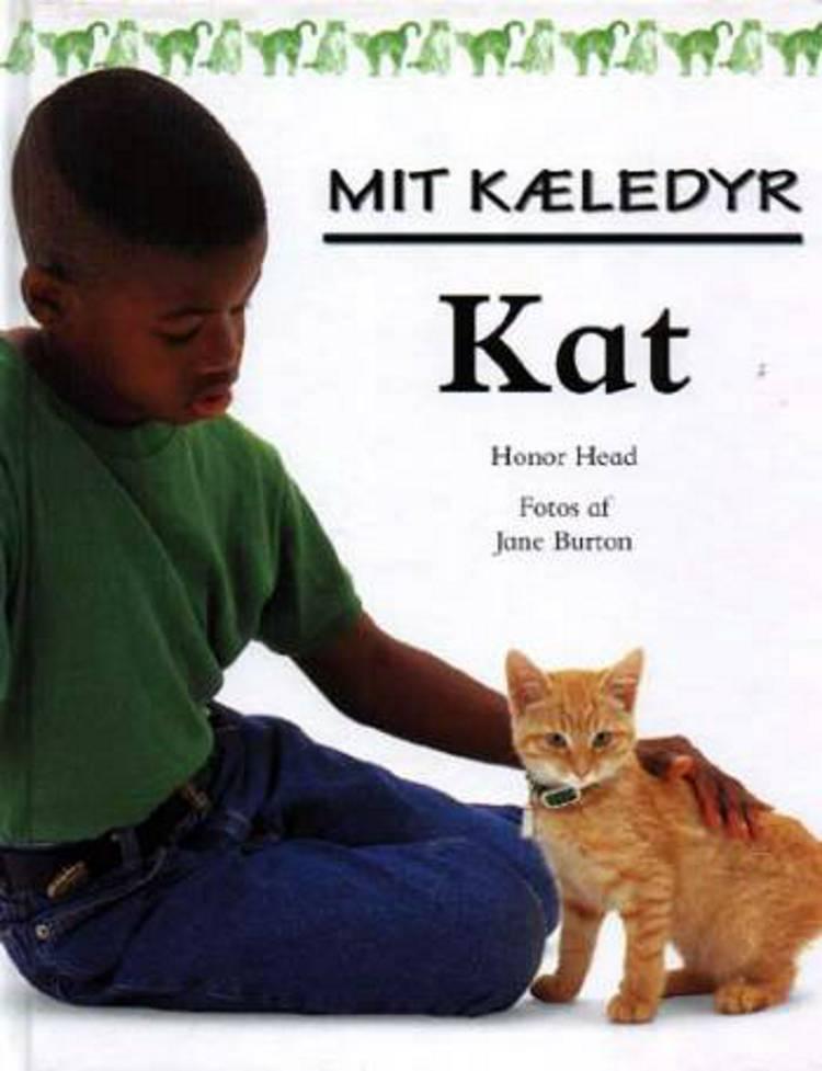 Kat af Honor Head