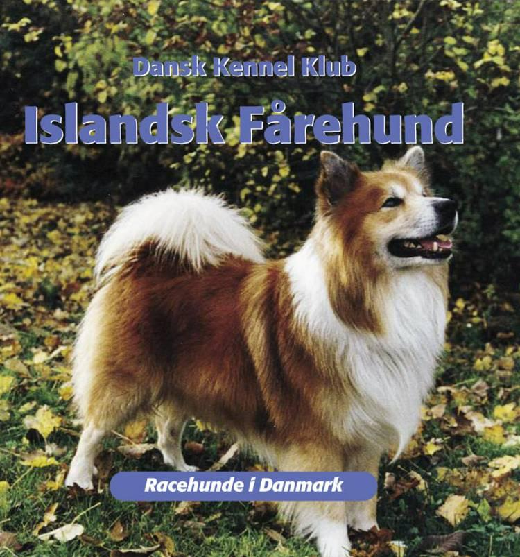 Islandsk fårehund af Dansk Kennelklub