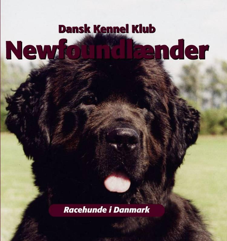 Newfoundlænder af Dansk Kennelklub