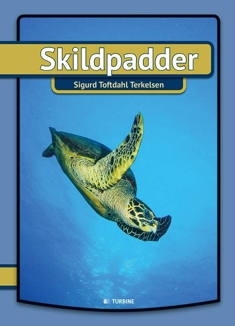 Skildpadder af Sigurd Toftdahl Terkelsen