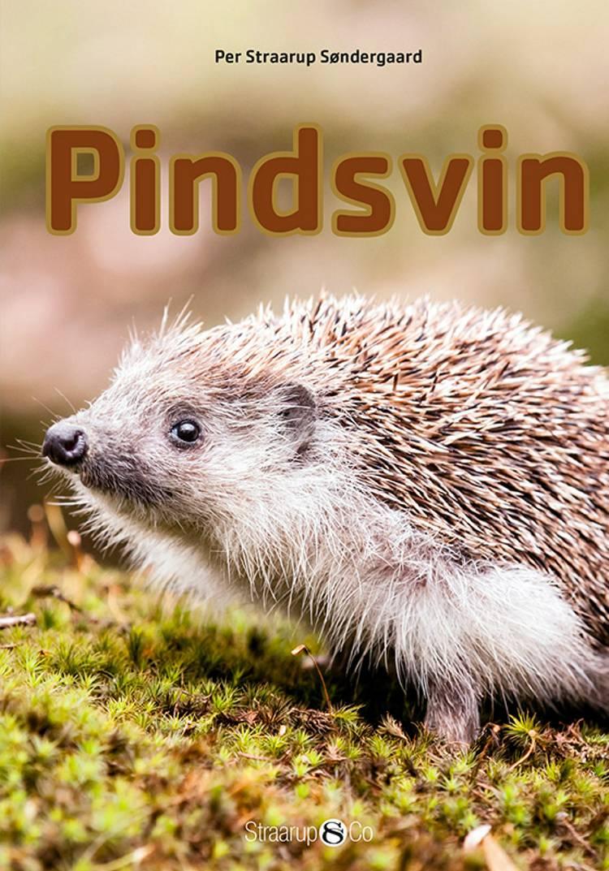 Pindsvin af Per Straarup Søndergaard
