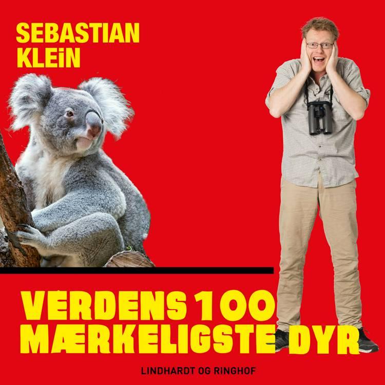 Verdens 100 mærkeligste dyr, Koalabjørnen af Sebastian Klein