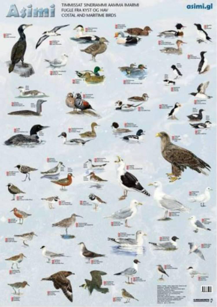 Fugle fra kyst og hav af Jørgen Steen