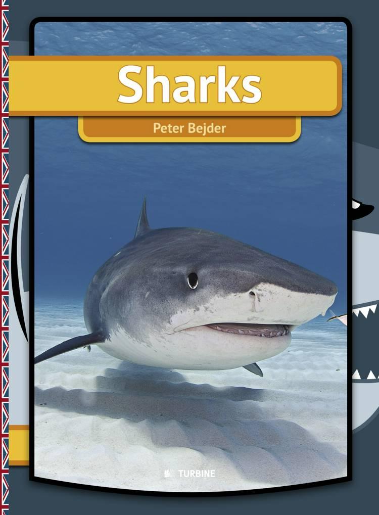 Sharks af Peter Bejder