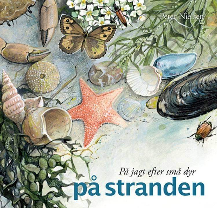 På jagt efter små dyr på stranden af Peter Nielsen