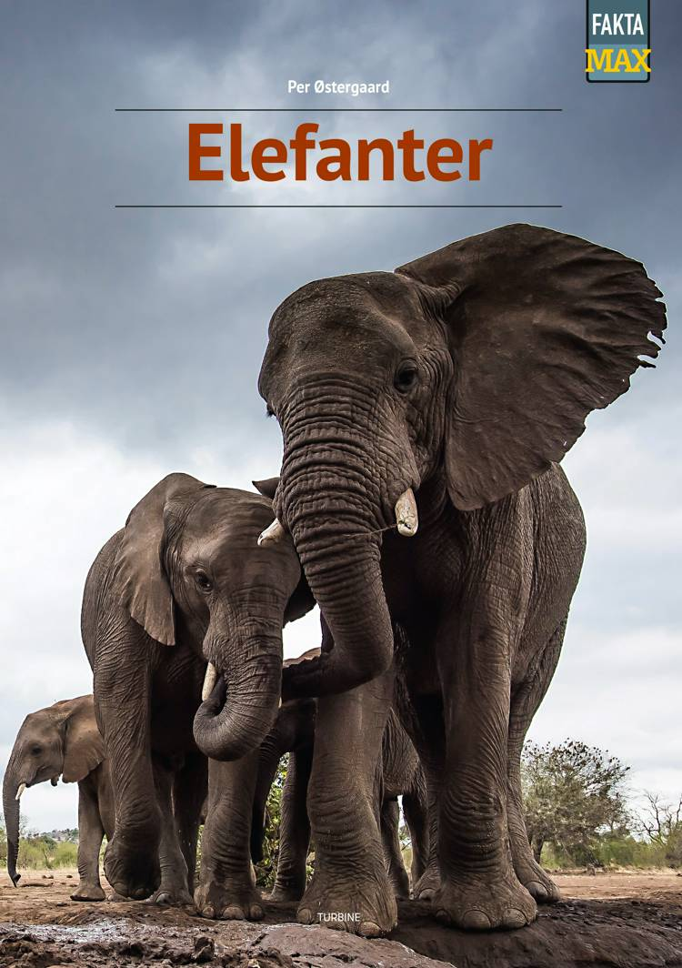 Elefanter af Per Østergaard
