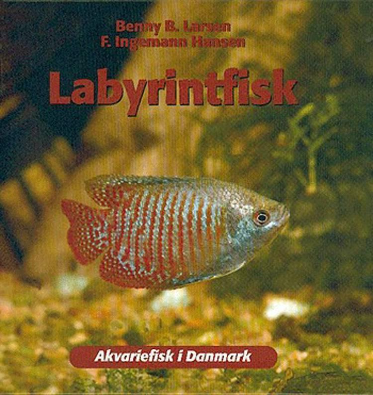 Labyrintfisk af Benny B. Larsen og F. Ingemann Hansen