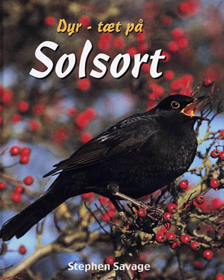 Solsort af Stephen Savage