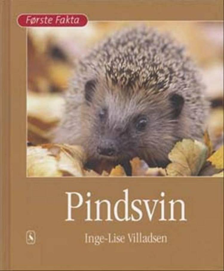 Pindsvin af Inge-Lise Villadsen