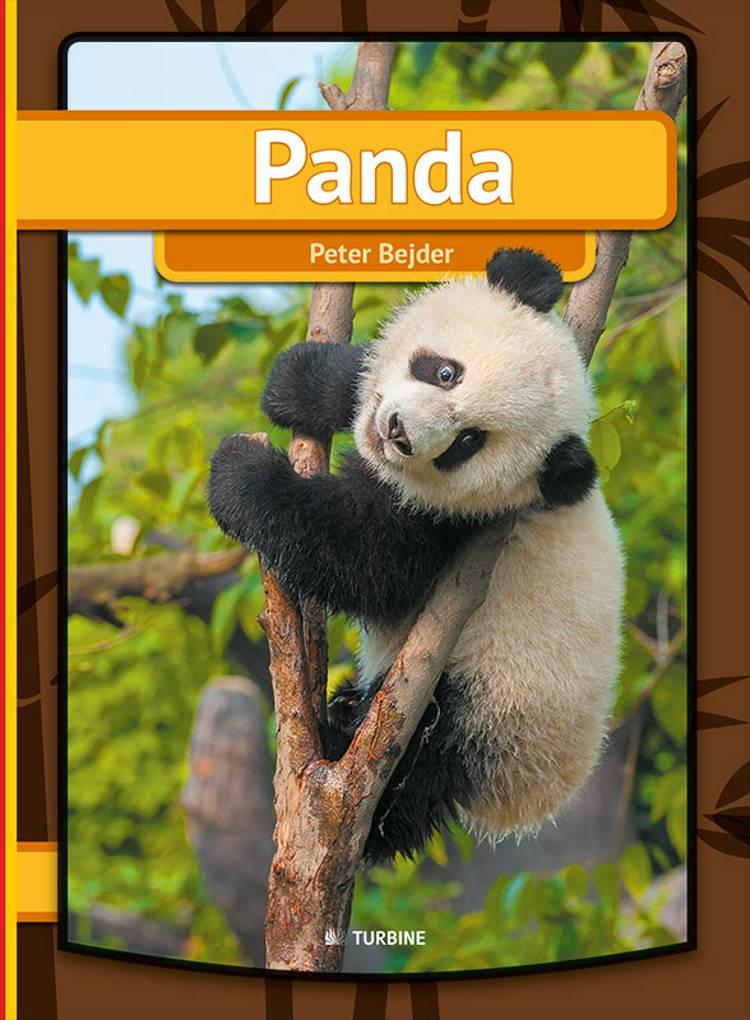 Panda af Peter Bejder