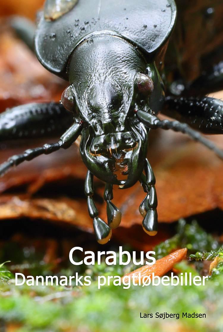 Carabus af Lars Søjberg Madsen